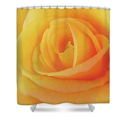 Yellow Rose 4788 Shower Curtain by Michael Peychich