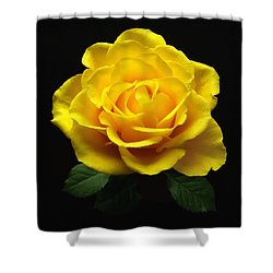 Yellow Rose 6 Shower Curtain