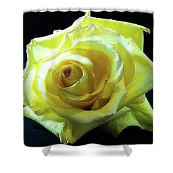 Yellow Rose-7 Shower Curtain