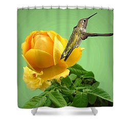 Yellow Rose And Hummingbird 2 Shower Curtain