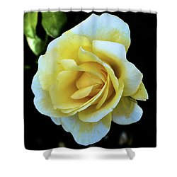 Yellow Rose Shower Curtain
