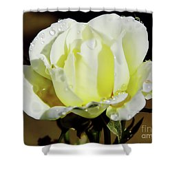 Yellow Rose Dew Drops Shower Curtain
