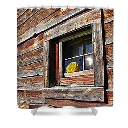 Yellow Rose Eclipse Shower Curtain by Tim Allen