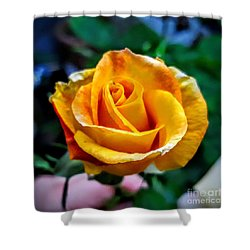 Shower Curtain featuring the photograph Yellow Rose by Garnett Jaeger