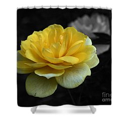 Yellow Rose In Bloom Shower Curtain by Smilin Eyes  Treasures