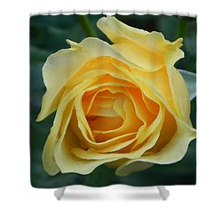 Yellow Rose Shower Curtain by John Parry
