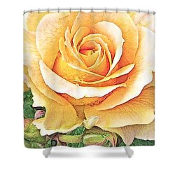 Shower Curtain featuring the photograph Yellow Rose by Karen Shackles