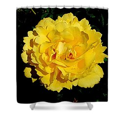 Yellow Rose Kissed By The Rain Shower Curtain