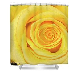 Yellow Rose Shower Curtain by Nance Larson