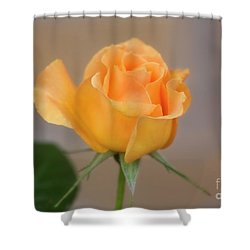 Yellow Rose Of Texas Shower Curtain by Joan Bertucci