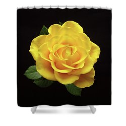 Yellow Rose On Black Shower Curtain