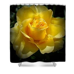 Yellow Rose Shower Curtain by Veronica Rickard