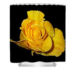 Yellow Rose With Dew Drops Shower Curtain by Patricia Barmatz