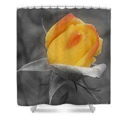 Yellow Rosebud Partial Color Shower Curtain by Smilin Eyes  Treasures