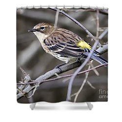 Shower Curtain featuring the photograph Yellow-rumped Warber In Fall Colors by Ricky L Jones