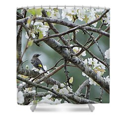 Yellow-rumped Warbler In Pear Tree Shower Curtain
