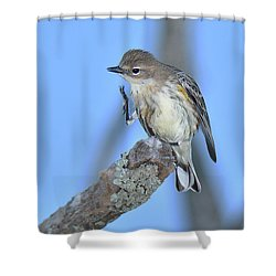 Yellow-rumped Warbler Itch Shower Curtain