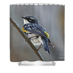Yellow-rumped Warbler Portrait Shower Curtain by Anita Oakley