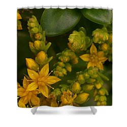 Yellow Sedum Shower Curtain by Richard Brookes