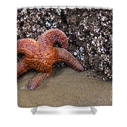 Orange Starfish On Beach #4 Shower Curtain