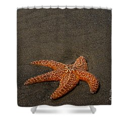 Orange Starfish On Oregon Beach Shower Curtain
