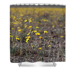 Shower Curtain featuring the photograph Yellow Superbloom by Suzanne Oesterling