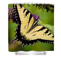 Yellow Swallowtail Shower Curtain