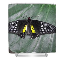 Golden Birdwing Shower Curtain by David and Lynn Keller