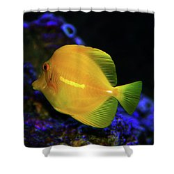 Shower Curtain featuring the photograph Yellow Tang by Anthony Jones