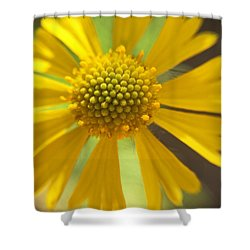 Yellow Texas Wildflower Macro Shower Curtain