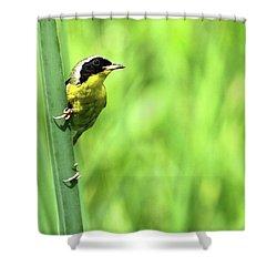 Yellow Throat Shower Curtain