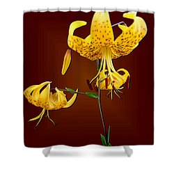 Yellow Tiger Lilies Shower Curtain by Tara Hutton