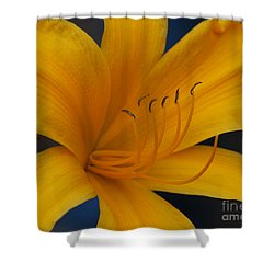 Yellow Tiger Lilly Shower Curtain