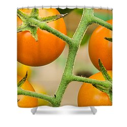 Shower Curtain featuring the photograph Yellow Tomatoes by Paul Miller