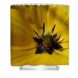 Yellow Tulip 1 Shower Curtain by Jean Bernard Roussilhe