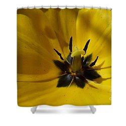 Yellow Tulip 1 Shower Curtain