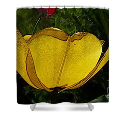 Yellow Tulip 2 Shower Curtain by Jean Bernard Roussilhe
