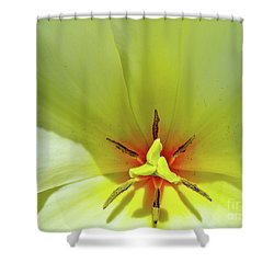 Shower Curtain featuring the photograph Yellow Tulip by Susan Cole Kelly