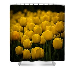Shower Curtain featuring the photograph Yellow Tulips by Jay Stockhaus