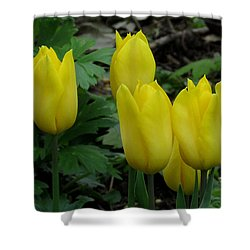 Yellow Tulips Shower Curtain