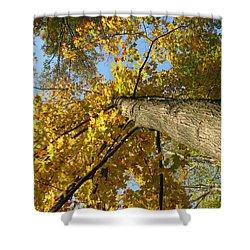Yellow Umbrella Shower Curtain by Michael Krek