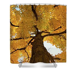 Yellow Up Shower Curtain