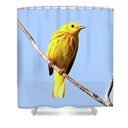 Yellow Warbler #1 Shower Curtain by Marle Nopardi