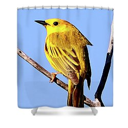 Yellow Warbler #2 Shower Curtain by Marle Nopardi