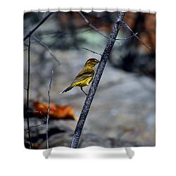 Yellow Warbler 2 Shower Curtain