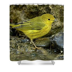 Yellow Warbler Shower Curtain by Doug Herr