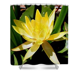 Yellow Water Lily Shower Curtain by M Diane Bonaparte