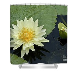 Yellow Water Lily With Bud Nymphaea Shower Curtain by Heiko Koehrer-Wagner