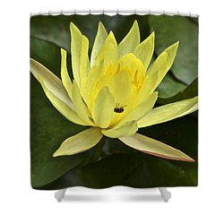 Yellow Waterlily With A Visiting Insect Shower Curtain