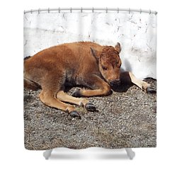 Yellowstone Bison Calf  Shower Curtain